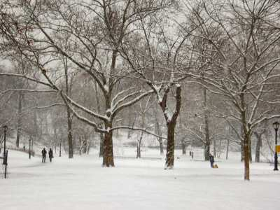 Free – Central Park NYC